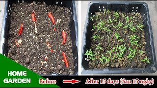 Great! You do not need to buy Chilli seeds anymore