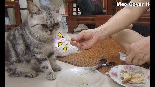 Cat Eating Chicken Meats So Yummy | Funny Cat Vines 2018 [Funny Pets]