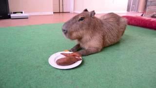 Eating Yams