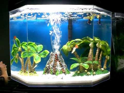 5 Gallon Guppy Ghost Shrimp Aquarium Fish Tank Volcano