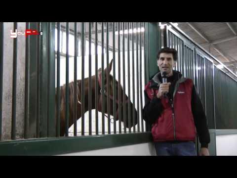 Cavallo miti e leggende da sfatare