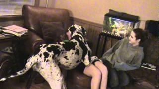 M2U00089.MPG  Joanna's Big Dog
