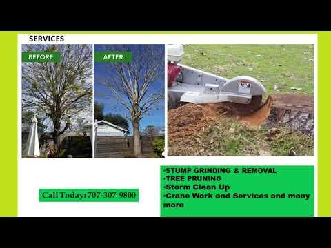 Tree Pruning Napa