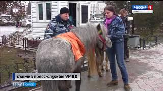 Омские полицейские вернули потерявшихся пони владелице