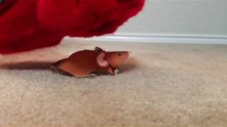 Stomping Out a Little Mouse