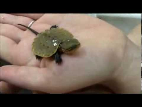 Rare Turtles Hatchs At NY Zoo, You Won't Believe What it's Called