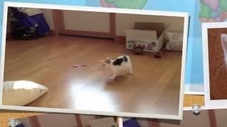 日本人收養小貓一個月的紀錄