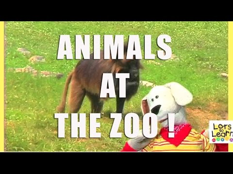At The Zoo - Lots To Learn Preschool Videos