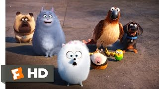 The Secret Life of Pets - Secret Route Scene (4/10)   Movieclips