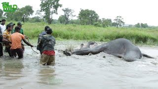 Wounded elephant struggling in the water (part 1)