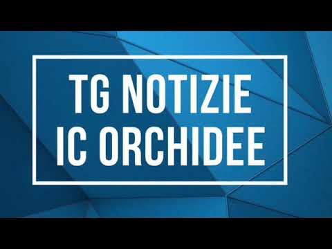 TG Notizie Orchidee: scuola dell'Infanzia.