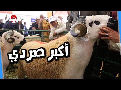 أكبر صردي يفوز بالملتقى الدولي للفلاحة بمكناس