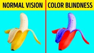 Here's How Color Blind People See the World