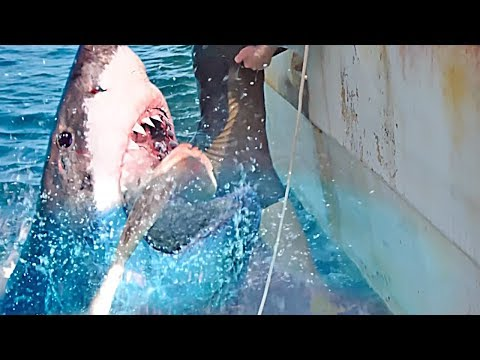 47 Meters Down 2: The Next Chapter | official trailer (2019)
