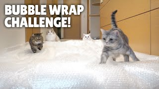 Bubble Wrap Challenge! Cats Try to Walk on Bubble Wrap!ㅣKittisaurus