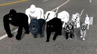 Black and WhiteAnimals Finger Family Song For Kids,Gorilla,rhymes,Lion,Tiger,bear,cheetha,NASHTOONTv