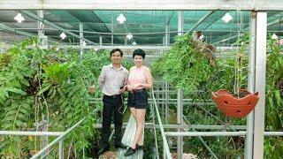 Vườn Lan Đẳng Cấp Như Resort 5 Sao Của Nữ Đại Gia Xinh Đẹp Ở Lạng Sơn [HOALANTV]