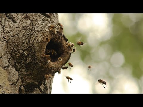 screenshot of youtube video titled Bee Swarms and what you should know