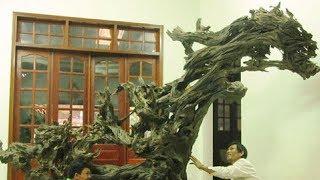 """Chuyện lạ: Nhặt được những gốc cây """"mục"""" tiền tỷ"""
