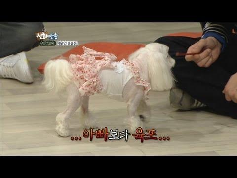 [JTBC] 신화방송 (神話, SHINHWA TV) 42회 명장면 - 애타는 파니바라기 앤디