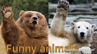 Funny Animals Farting | Hindi Dubbed | Talking Animals | Chetan Sehgal Vines