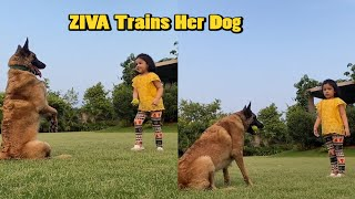 MS Dhoni's cute daughter Ziva trains huge Dutch Shepherd d..