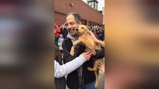 Watch 57 Dogs Rescued from Kill Shelters Meet Their New Families For First Time