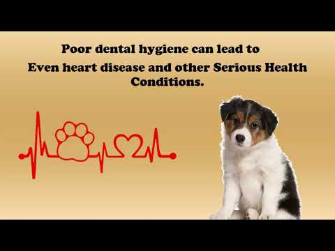 Pet Dental Care At Powellvets