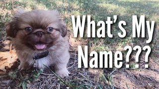 Puppy Name Reveal! | Teen Mom Vlog