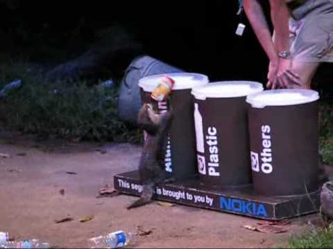 Otter Struggles To Recycle Can
