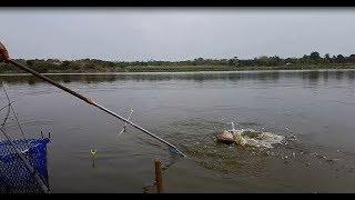 Đi câu cá chép mà mấy con này phá quá - bắt tạm một thùng đem về vậy