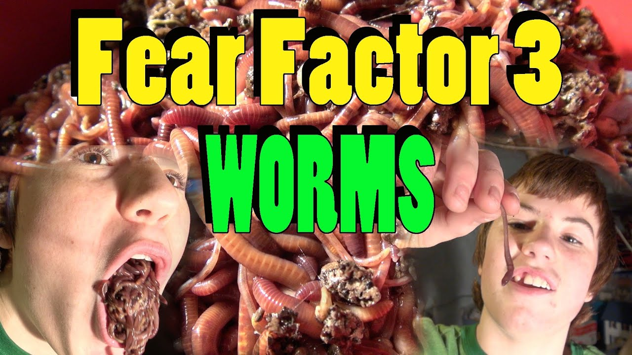 """Real Edible Flavored Worms """"Larvets"""" Yummy Snacking/Fear ...  Fear Factor Worms"""