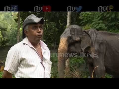 The true story of the Tikiri elephant | Ru News