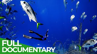 Adventure Ocean Quest: 24 Hours on the Reef | Free Documentary Nature