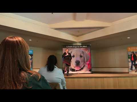 Facebook live; GDB graduation with my guide dog Arabella!
