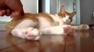 ぐーたら猫2