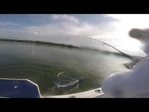 pesca de Corvina con vista bajo el agua en La Celosa