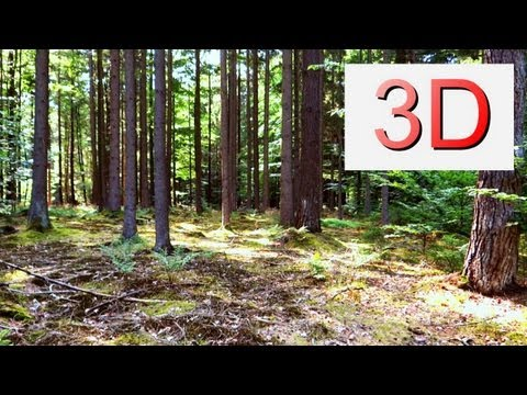3D VIDEO: A Forest Dreamscape 2.0