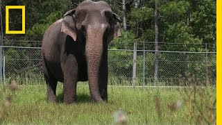 When Ringling Bros. Retires Its Elephants, This is Where They Live | National Geographic