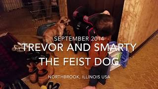 Trevor and Smarty the Feist Dog