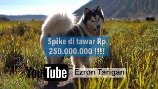 Spike di tawar orang Rp 250.000.000 !!! - Ezron Tarigan & Humble Spiker #Dailyvlog #StoryTelling #1