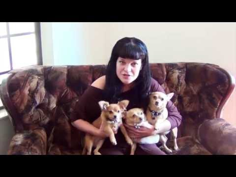 Remember Me Thursday 2016 Official Spokesperson NCIS actress Pauley Perrette is joined by her three rescue dogs (Rosie, Grace and Bug) to promote the global pet adoption awareness campaign on September 22 2016.