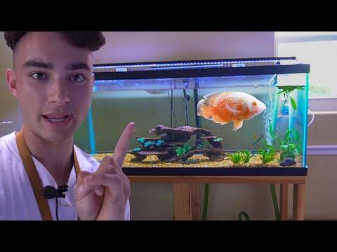 Big FISH TANK Gets EXOTIC NEW FISH!