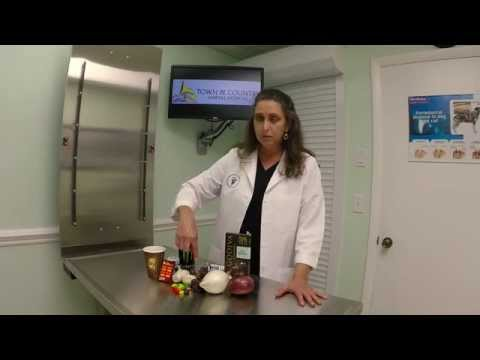 Items toxic to your pets - Veterinarian Naples FL (239) 353-5060