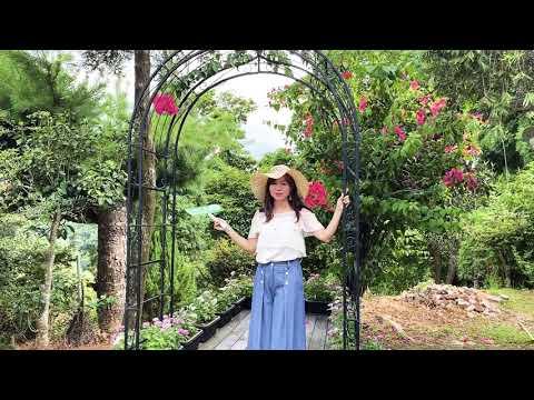玩美打卡景點「莫內秘密花園」