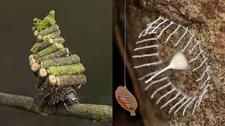 12 INSANE Nests Built By Insects