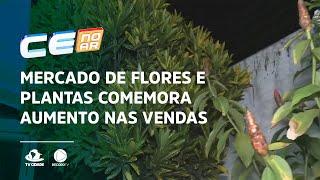 Mercado de flores e plantas comemora aumento nas vendas
