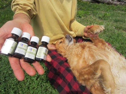 Natural Flea Amp Tick Repellent For Dogs Amp Cats 2 Youtube
