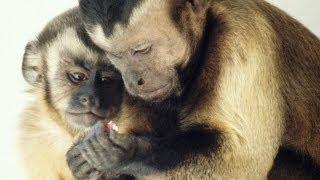 Moral behavior in animals | Frans de Waal