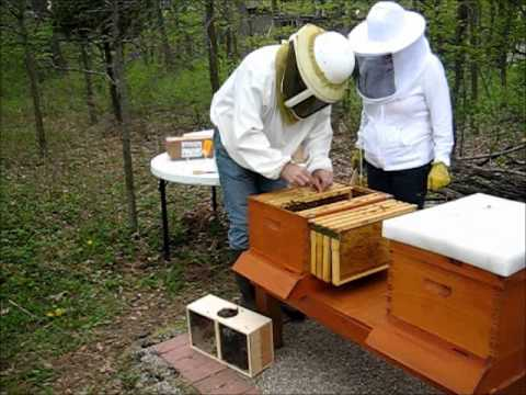 Backyard Beekeeping Part 16(S2:E2): Hiving 2 Packages of Bees